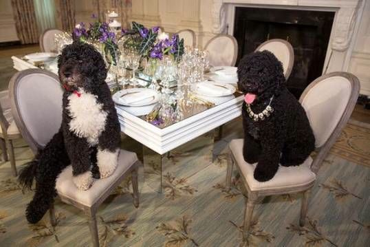 Bo and Sunny Obama, all decked in diamond necklaces. Doesn't that make you proud to be an American?