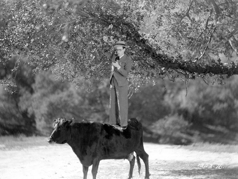 "Another cow. This time Harold Lloyd in a still from ""Welcome Danger"" ('29)."