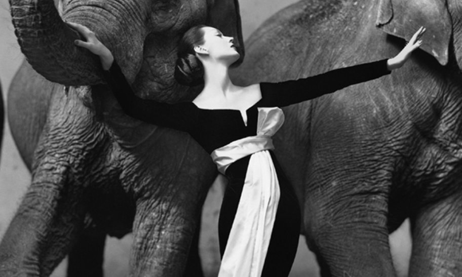 Richard Avedon, Dovima with Elephants, 1955