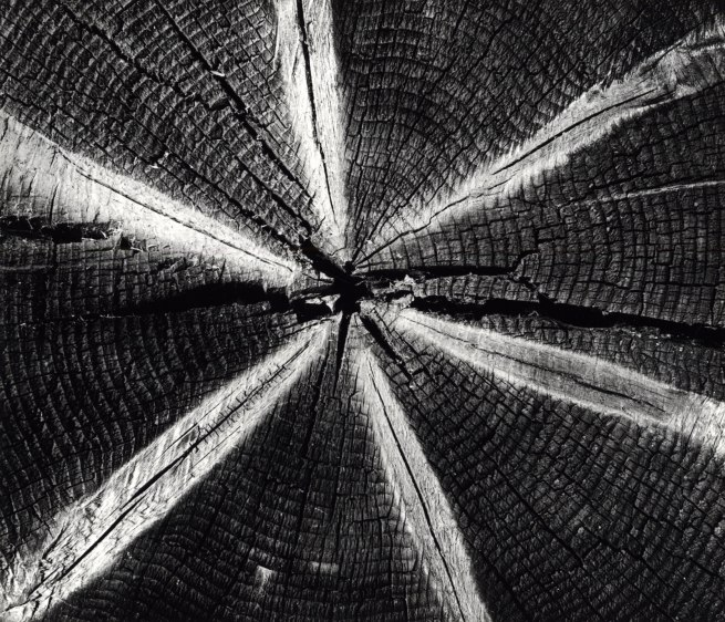 Brett Weston (1911 – 1993) Wood 1972 Silver gelatin print 7 1:2 x 8 5:8 inches The Brett Weston Archive Courtesy Christian Keesee Collection, 2016