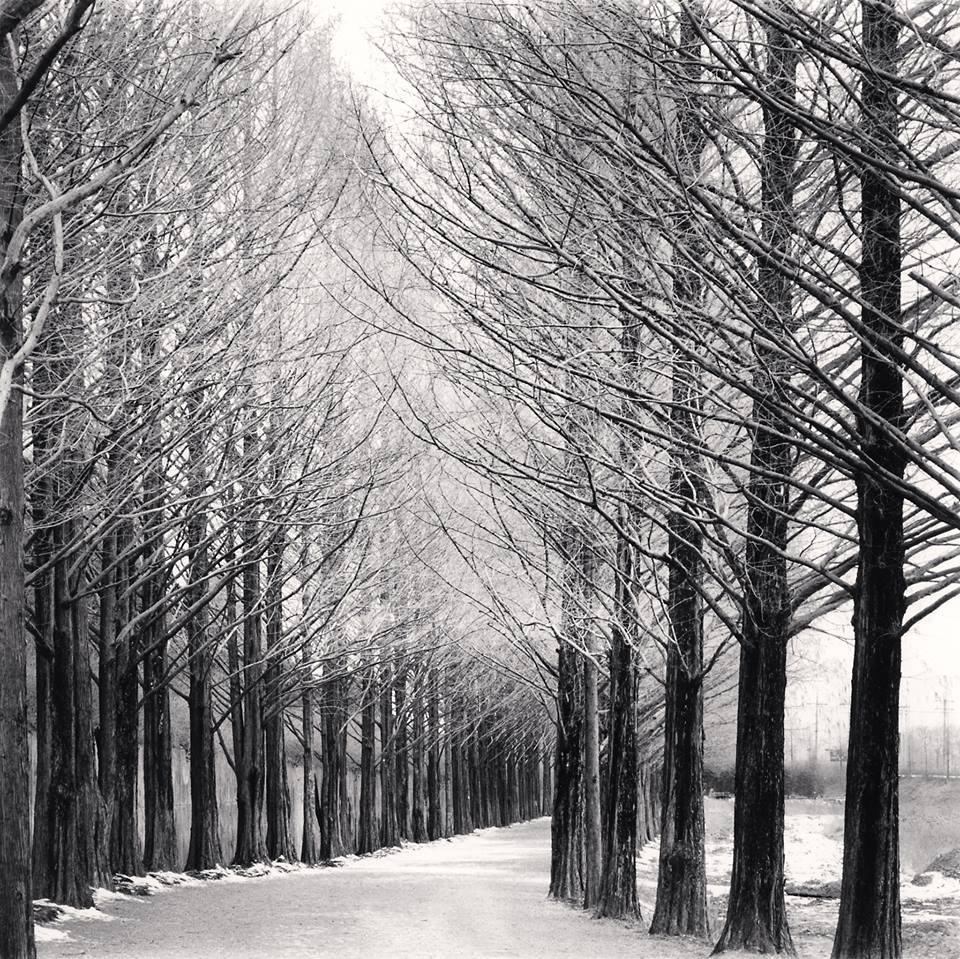 Michael Kenna Alley of Trees, Damyang, Jeollanamdo, South Korea, 2012