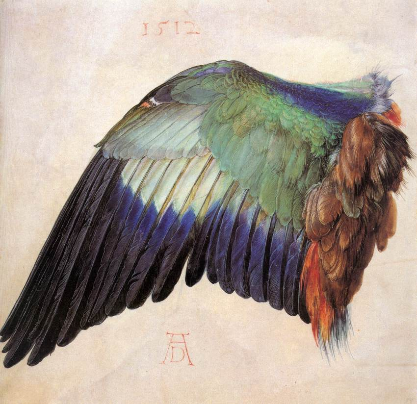 ALBRECHT DÜRER (1471-1528) 'The Wing of a Blue Roller' 1512 (watercolor and gouache), Albertina Museum, Vienna.